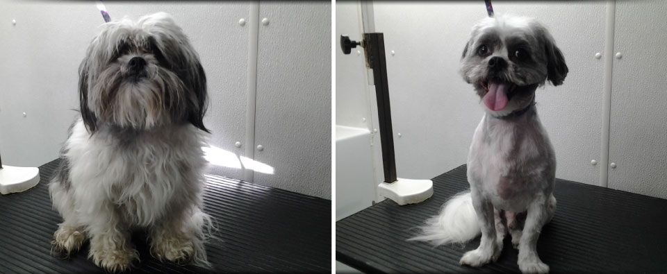 Before and After - small dog